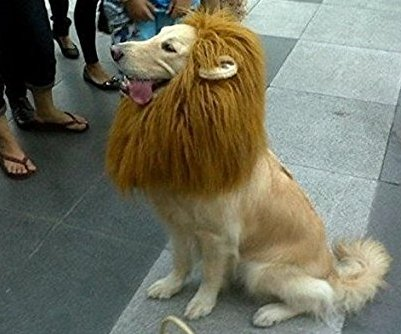 lion dog mane mask